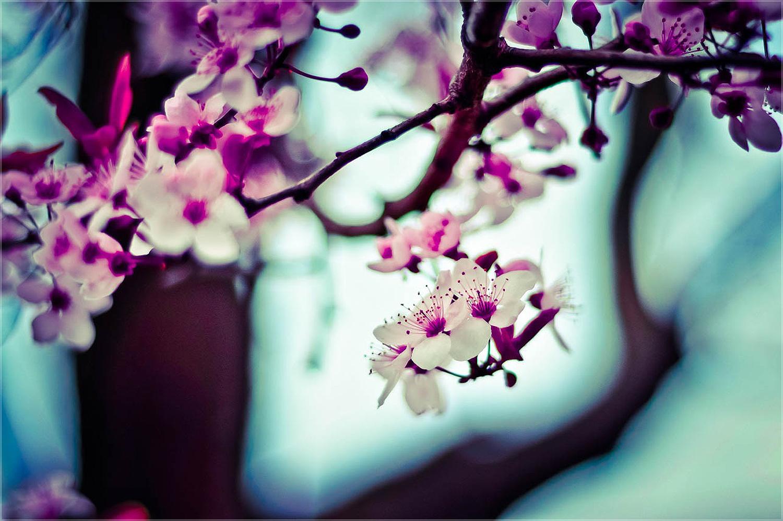 blur-flowers-nature-471